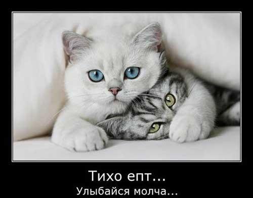 Смешные статусы про котов